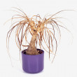 Withered Plant — Stock Photo #17215861
