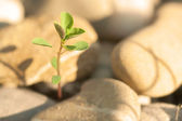 Little Plant on Stones — Stock Photo