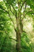 Drzewo z jasnym światłem w słońcu — Zdjęcie stockowe