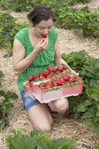 Women in a strawberrie field — Stock Photo