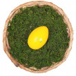 Easter basket with one Egg - Stock Photo