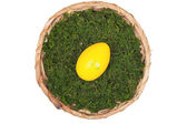 Easter basket with one Egg — Stock Photo