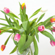 Tulip in front of white background — Stock Photo
