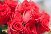 Red roses — Stock fotografie