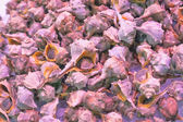 Shells on a fish market — Stock Photo