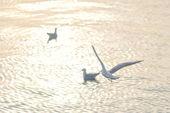 Gaviota volando — Foto de Stock
