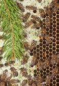 Пчелы в улей — Стоковое фото