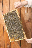 Honeycomb i en bikupa — Stockfoto