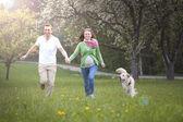 Veliler ile köpek yeşil zevk için — Stok fotoğraf