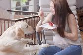 Pregnant Girl with a dog — Foto de Stock