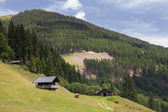 Alpine cabins with cows — Stock Photo