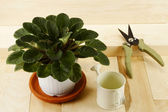 Houseplant, watering can and pruner — Stock Photo