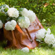 Carpetbag full of white flowers — Stock Photo