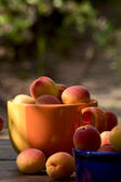 Apricots in ceramic bowls — Stock Photo