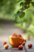 Apricots on an old table — Stock Photo
