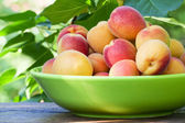 Apricots in a ceramic bowl — Stock Photo