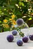Dojrzałe śliwki i dzikie kwiaty — Zdjęcie stockowe