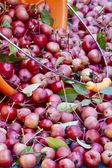 野生苹果 — 图库照片