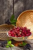 Wilde äpfel und beeren aronia — Stockfoto