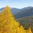 Colorado Aspen Tree and Mountain View — Stock Photo