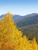 Colorado Aspen Tree and Mountain View — Stock Photo