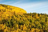 Mountain of Aspen Trees in Autumn — Stock Photo