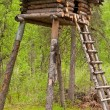 Tree House — Stock Photo #17599067