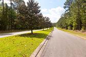 Magnolia Trees in Tallahassee, Florida — Stock Photo