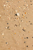 Sandy Beach with Many Varieties of Sea Shells — Stock Photo