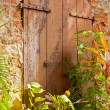 Grunge Door with Evergreen Plants — Stock Photo