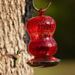 Hummingbird — Stock Photo #23641001