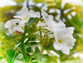 Tropical Flower — Stock Photo