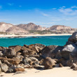 Cabo SLucas, Mexico — Stock Photo #28241033