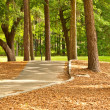 Cart Path — Stock Photo
