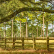 Tallahassee Countryside — Stock Photo
