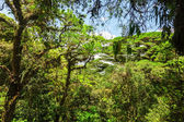 Costa Rica — ストック写真