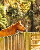 Horse — Zdjęcie stockowe