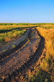 Road through field — Stockfoto