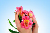 Flowers in woman hands — Stock Photo