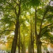 Stock Photo: Trees in morning