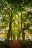 Träd på morgonen — Stockfoto
