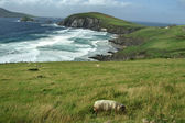 Shore of Dingle Peninsula — Foto Stock