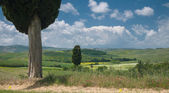 Two cypresses in wide Tuscan landscape — Stock Photo