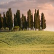 Stock Photo: Group of cypress trees at dusk with sky turning pink