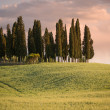 Group of cypress trees at dusk with the sky turning pink — Stock Photo