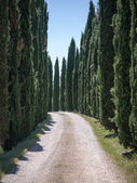 Lane lined with cypress trees in Tuscany — Stock Photo