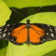 Orange, black and white butterfly — Stock Photo #34901831