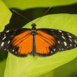 Stock Photo: Orange, black and white butterfly
