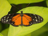 Orange, black and white butterfly — Stock Photo