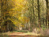 Autumn leaves in a forest in the fall — Stock Photo